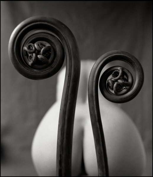 Mark Arbeit: Fiddlehead fern